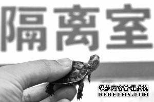 """龟、蛇、蝎子、鳄鱼都成了宠物 """"爬宠""""在年轻人圈里特别流行"""